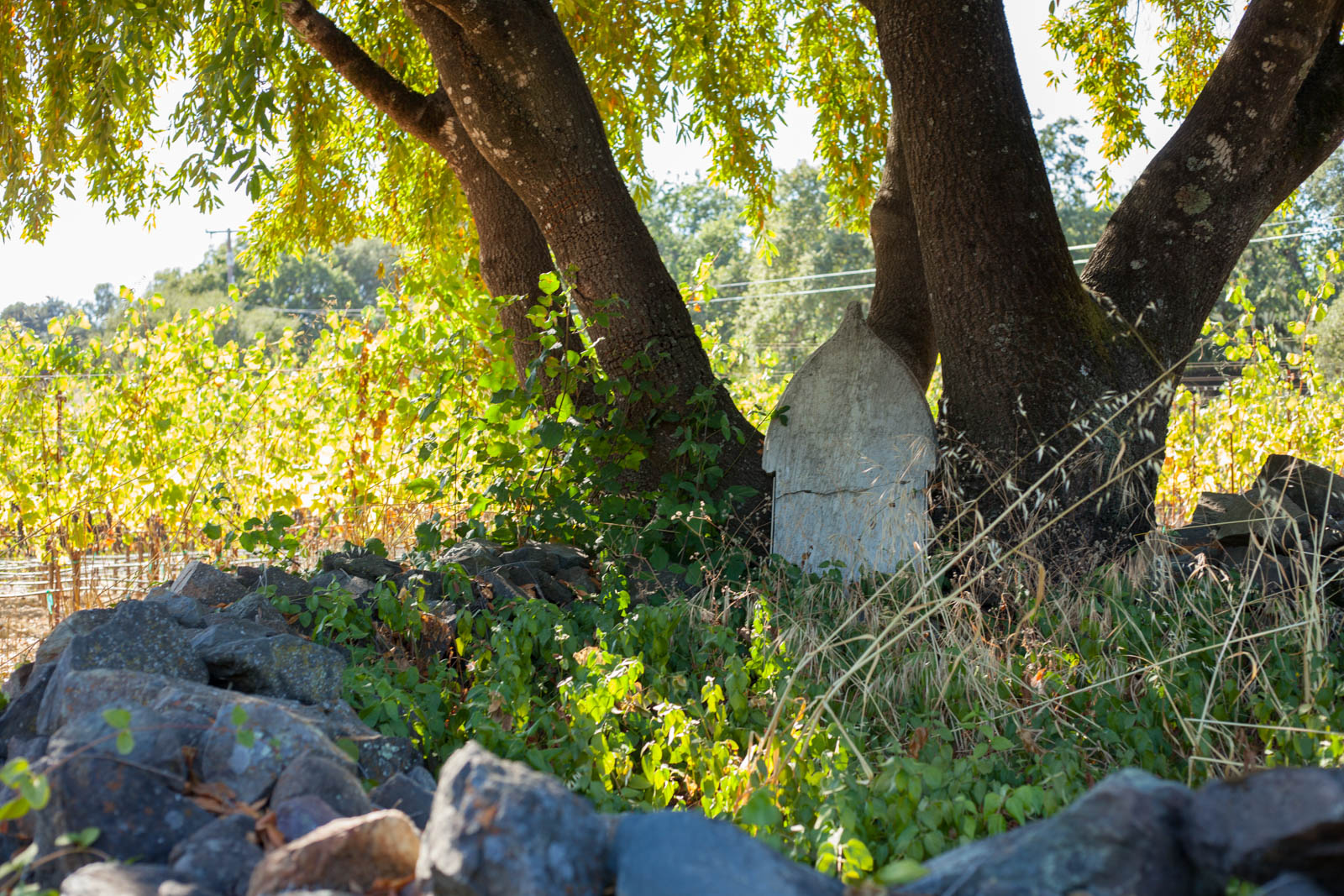Rueben Harper's grave below the vines of the Harper's Rest Vineyard at Arista Winery. ©Kevin Day / Opening a Bottle