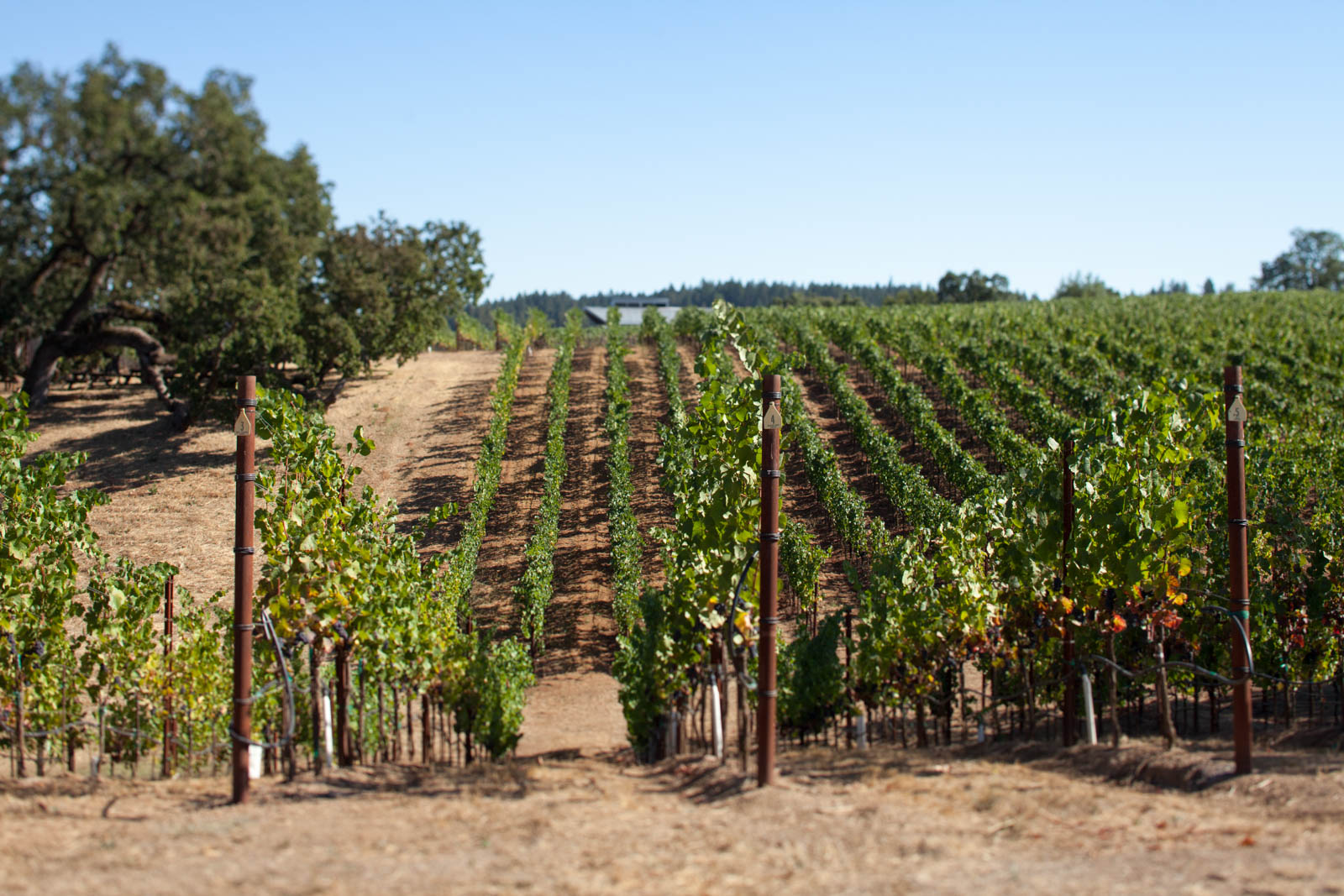 The Seven Stories Vineyard at Arista Winery. ©Kevin Day / Opening a Bottle