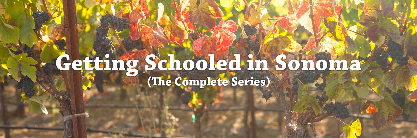 Getting Schooled in Sonoma – A Story by Kevin Day. ©Kevin Day
