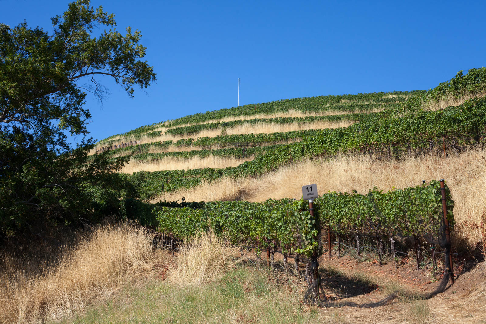 The hilltop vineyards at Fort Ross Winery, well above the fogline. ©Kevin Day / Opening a Bottle