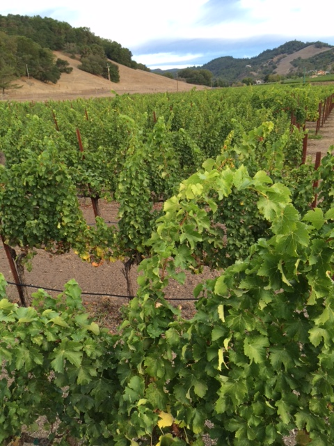 View of Grieve Family Vineyards in the Lovall Valley, California. ©Grieve Family Vineyards / Provided by Wilson Daniels