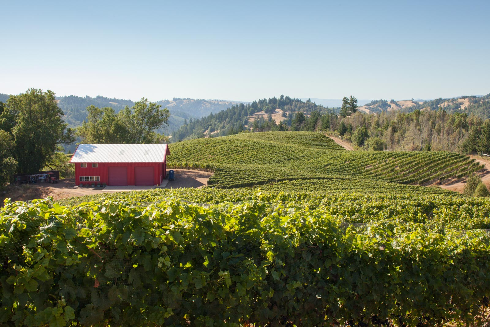 The view from the top of Fort Ross Winery's estate vineyard. ©Kevin Day / Opening a Bottle
