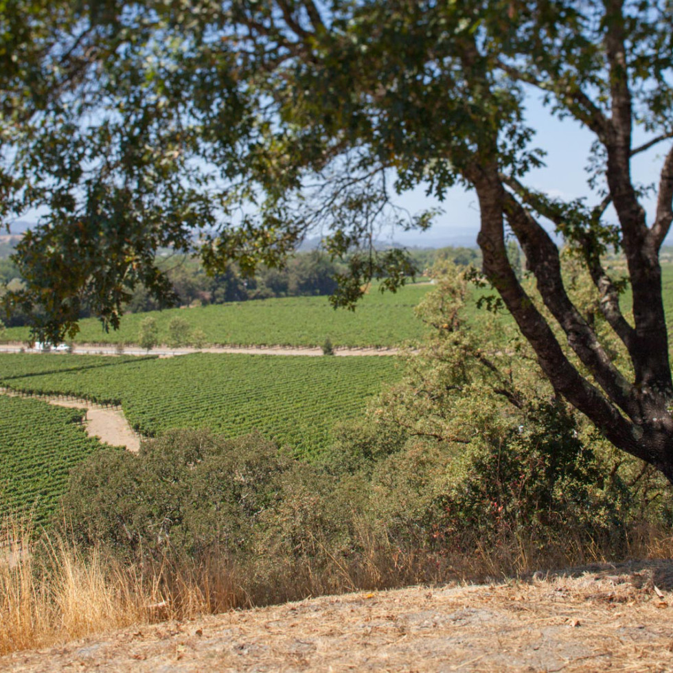 The view from Copain Wines Tasting Room just off Eastside Road. ©Kevin Day / Opening a Bottle