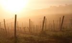 Spring time sunrise over Chianti, near Panzano, Italy and the Conca d'Oro