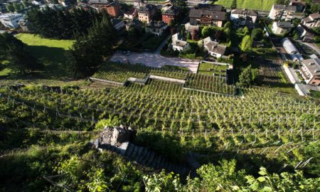 A view looking down from the Rocca de Piro castle at the vineyards of Ar.Pe.Pe. in the Grumello zone of Valtellina Superiore, Sondrio, Italy.