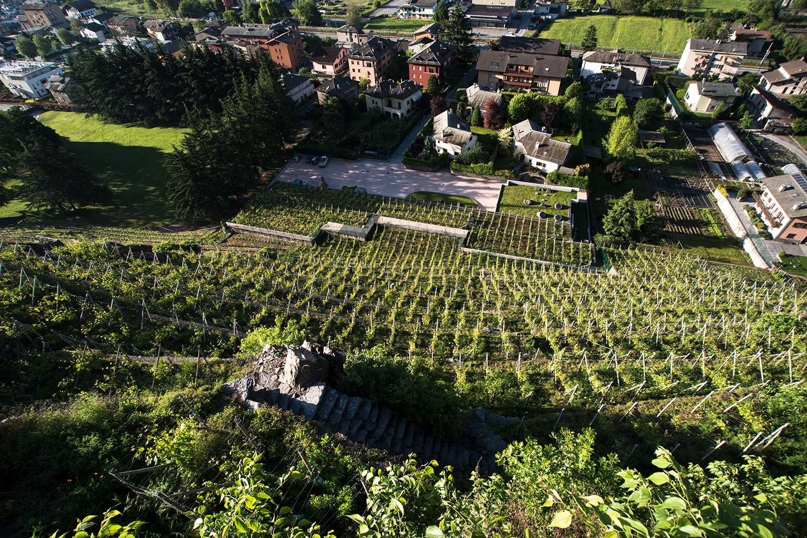 A Vineyard's Story: ARPEPE's Rocca de Piro