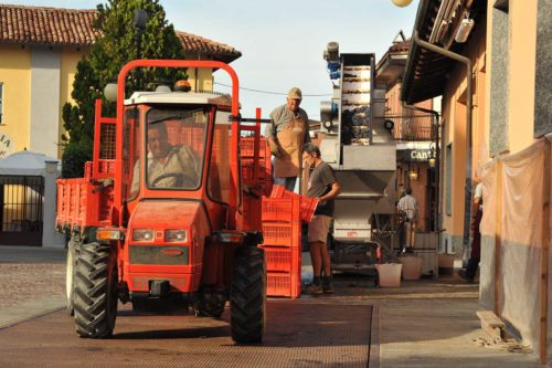 Bringing the grapes in from the vineyards. ©Produttori del Barbaresco