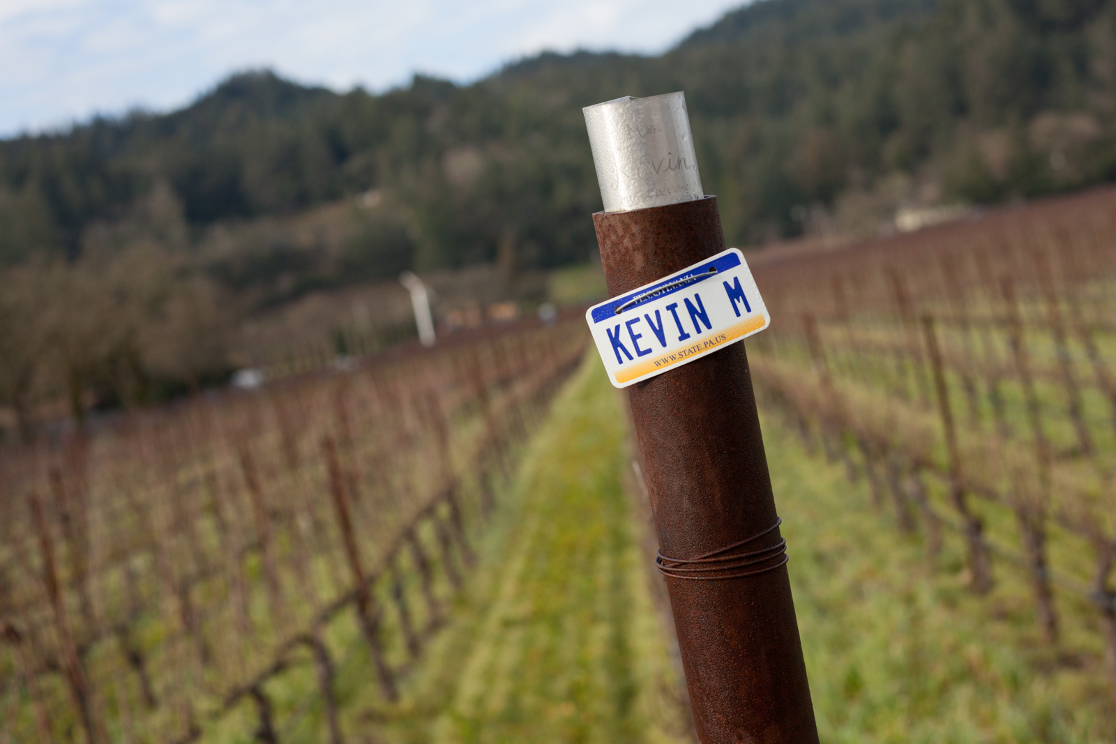 """Each employee — from winemaker to tasting room rep to admin — has their own row of vines to tend in Block 2A. """"I want them to know what goes into it,"""" says winemaker Kevin Morrisey. ©Kevin Day/Opening a Bottle"""