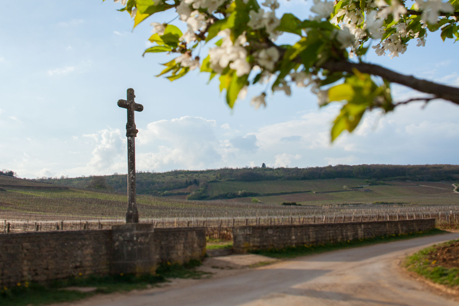 The Romanée-Conti Grand Cru in springtime. ©Kevin Day / Opening a Bottle