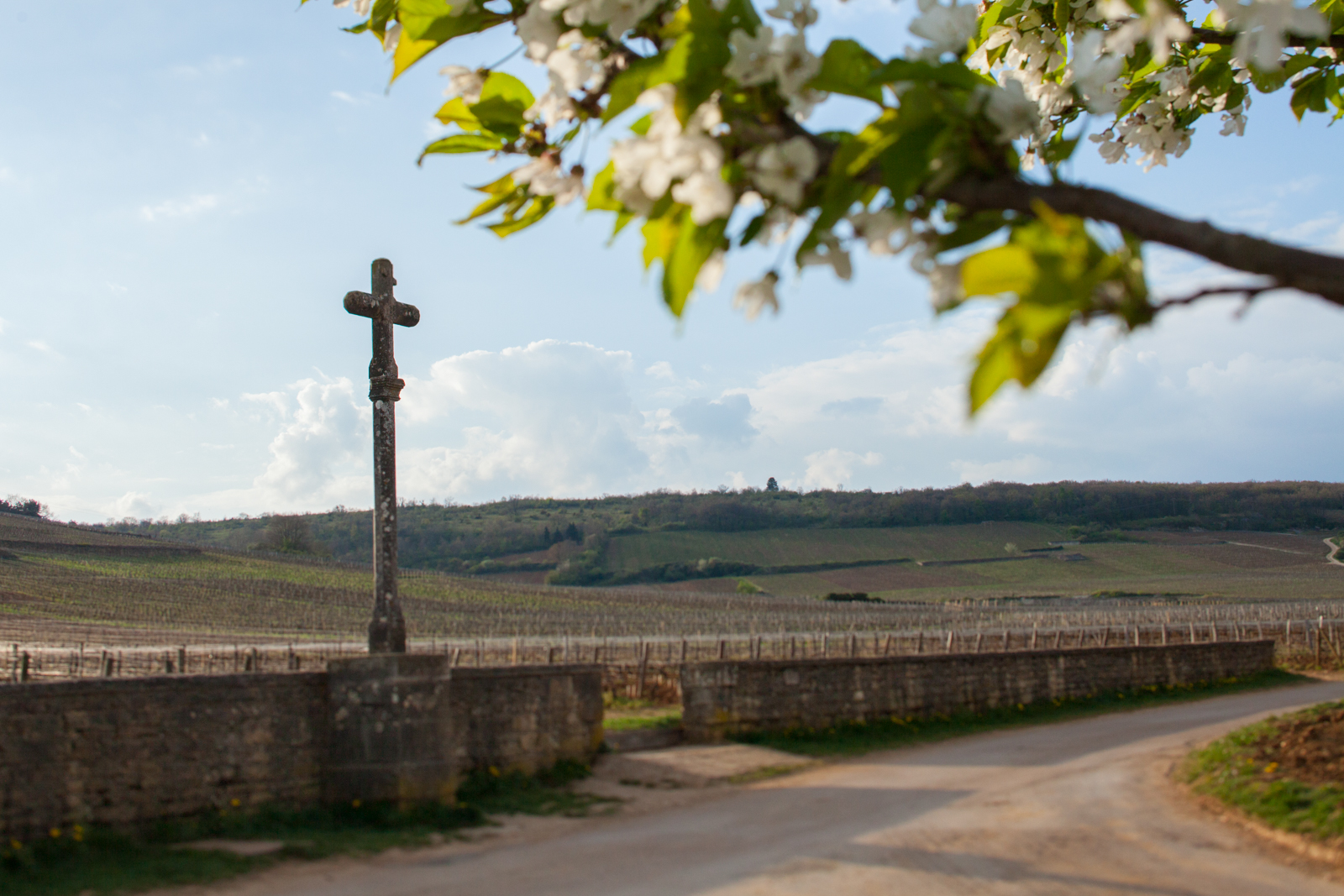 The Grand Cru Romanée-Conti in springtime. ©Kevin Day / Opening a Bottle