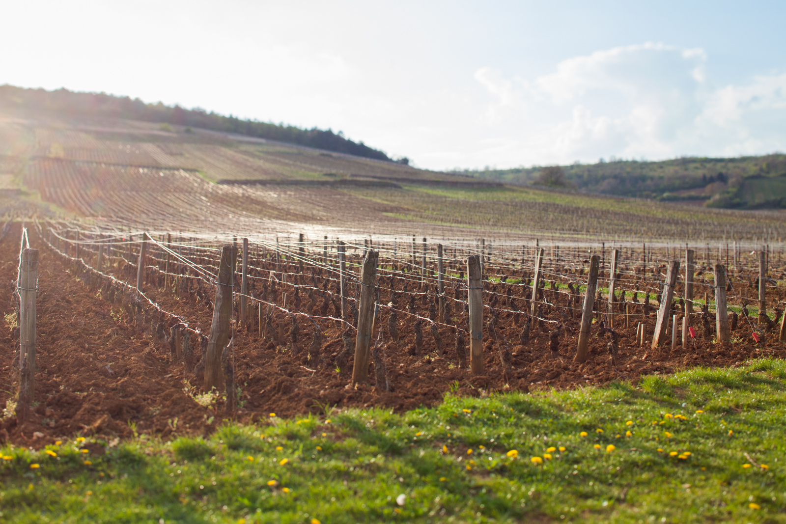 The vineyard of Romanée-Conti in the village of Vosne-Romanée, Burgundy, France. ©Kevin Day / Opening a Bottle