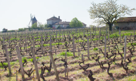 The iconic windmill of Moulin-à-Vent and the Clos de Londres vineyard of Château du Moulin-à-Vent. ©Kevin Day/Opening a Bottle