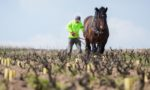 A man tends to his vineyard with a horse and plow in the Moulin-à-Vent region of Beaujolais, Burgundy, France. ©Kevin Day/Opening a Bottle