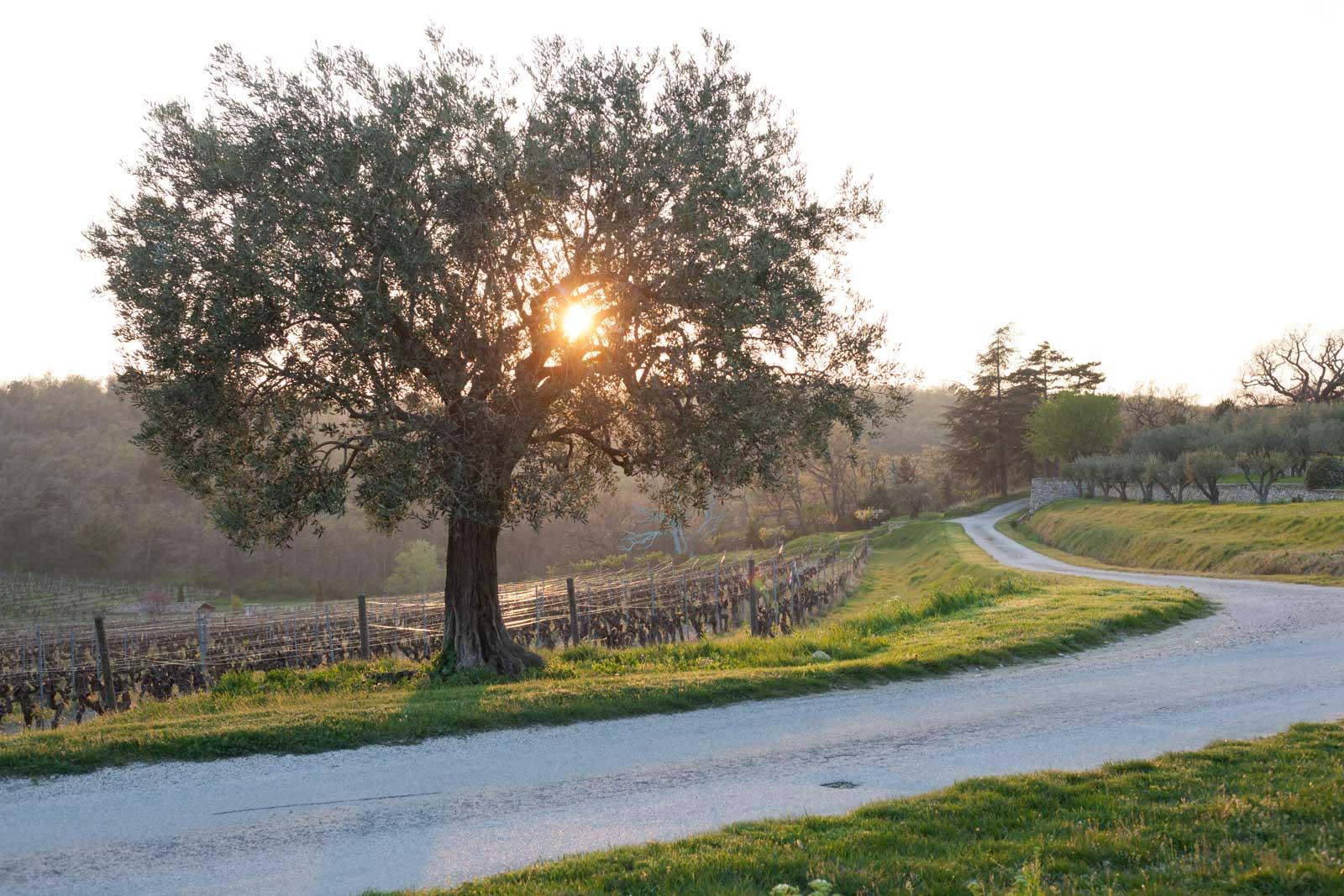 Chêne Bleu vineyard at sunset, Gigondas, Dentelles de Montmirail, France. ©Kevin Day/Opening a Bottle