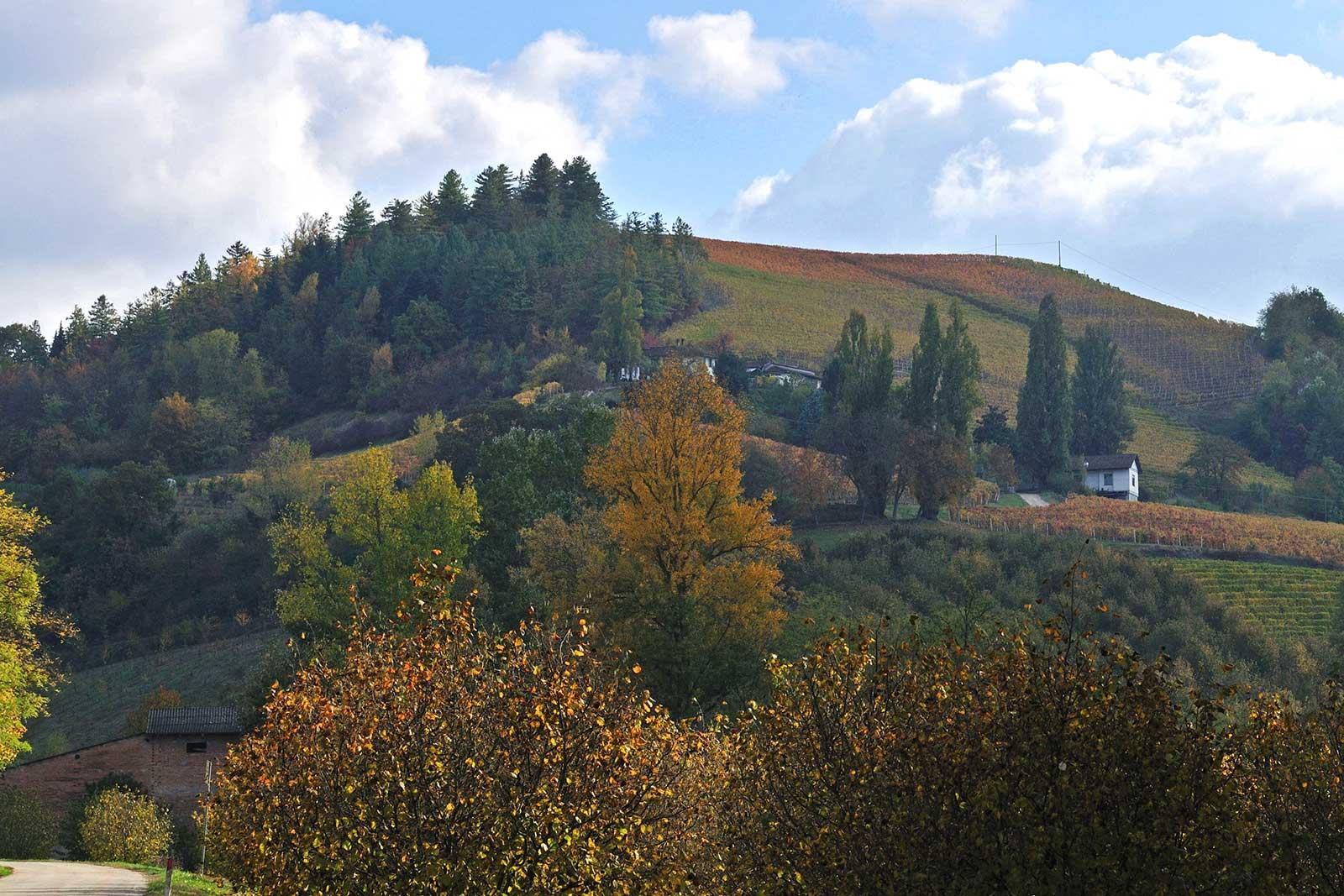 The Bricco del Drago vineyard above San Rocco Seno d'Elvio. ©Poderi Colla