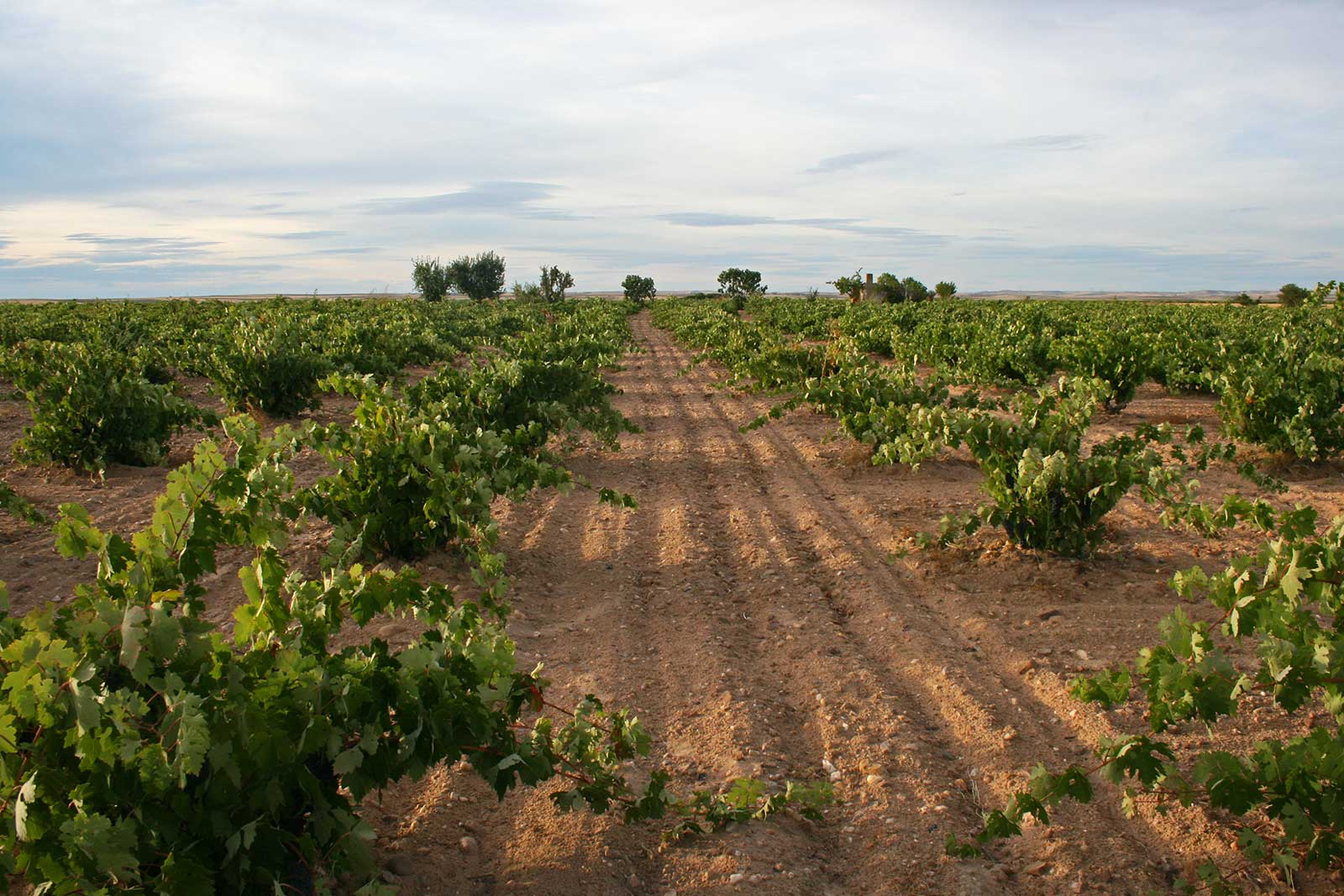 The dry plateau of the Toro DO in Spain. ©Vintae