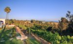 Dolin Estate winery, Malibu. ©Dolin Estate