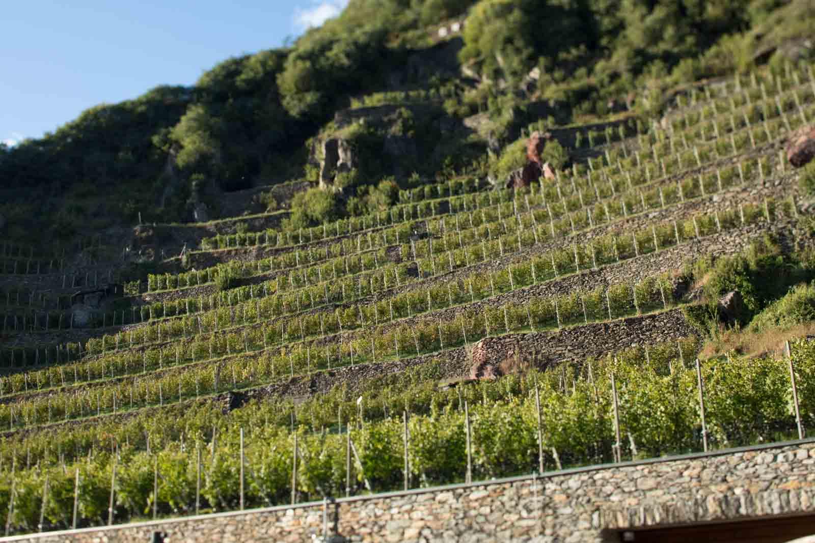 ARPEPE's Rocca de Piro vineyard in the Valtellina Superiore Grumello zone. ©Kevin Day / Opening a Bottle