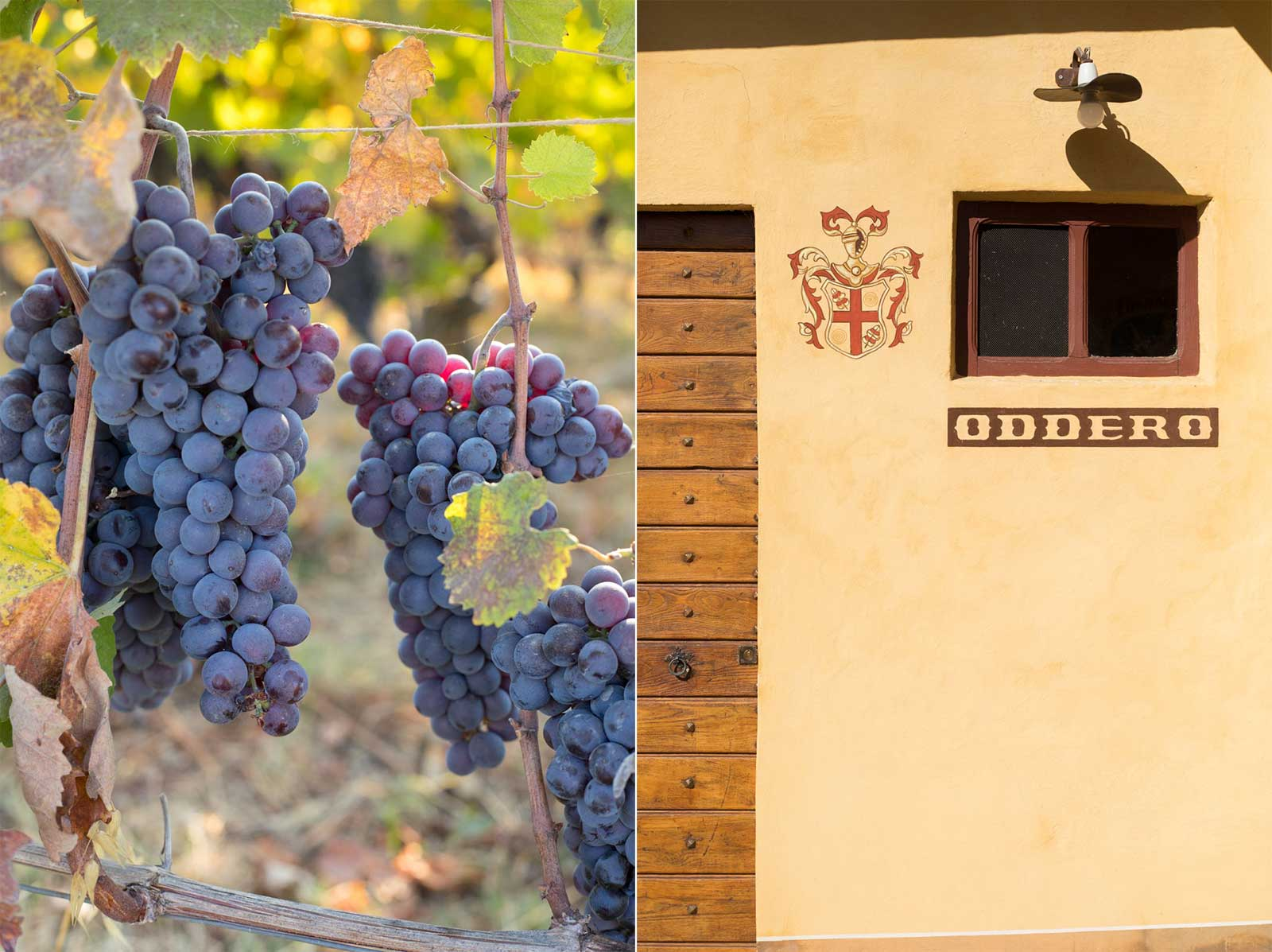 Left: Late season Nebbiolo clusters in the Brunate cru. Right: The classic crest of Oddero at the entrance to the cellar. ©Kevin Day/Opening a Bottle