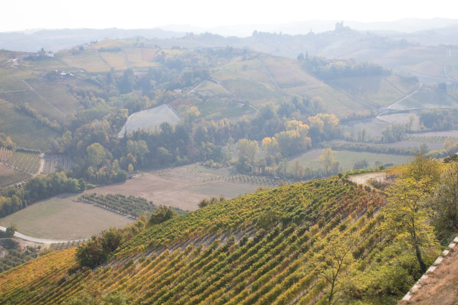 The view toward Serralunga d'Alba from Vietti's terrace atop Castiglione Falletto. The vineyards in the distance produce some of Barolo's sternest and most tannic expressions, and include the Lazzarito vineyard, which is a key holding for Vietti. ©Kevin Day/Opening a Bottle