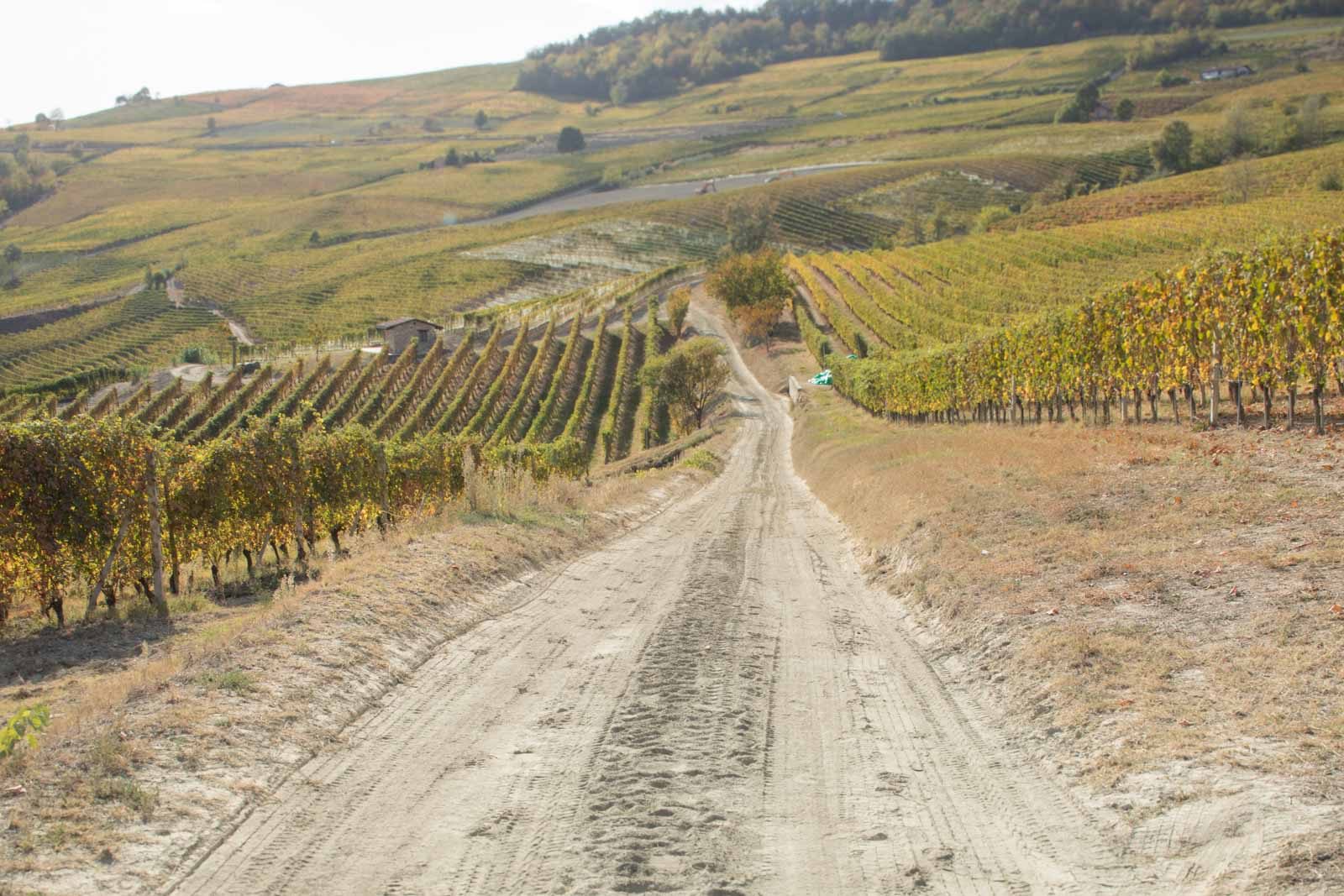 The Cerequio MGA, a Barolo Cru vineyard in between La Morra and Barolo ©Kevin Day/Opening a Bottle