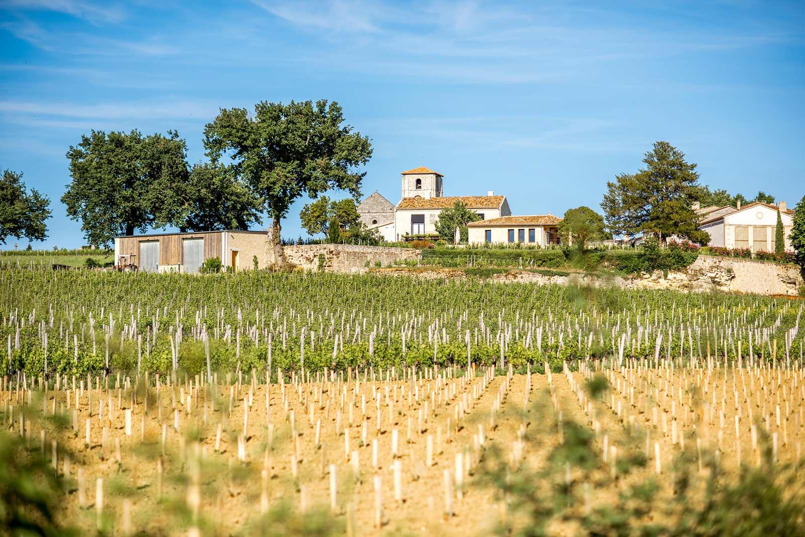 Lowland vineyard near Saint-Émilion