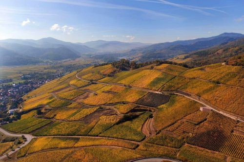 Alsace's Grand Cru Brand: A Vineyard's Story