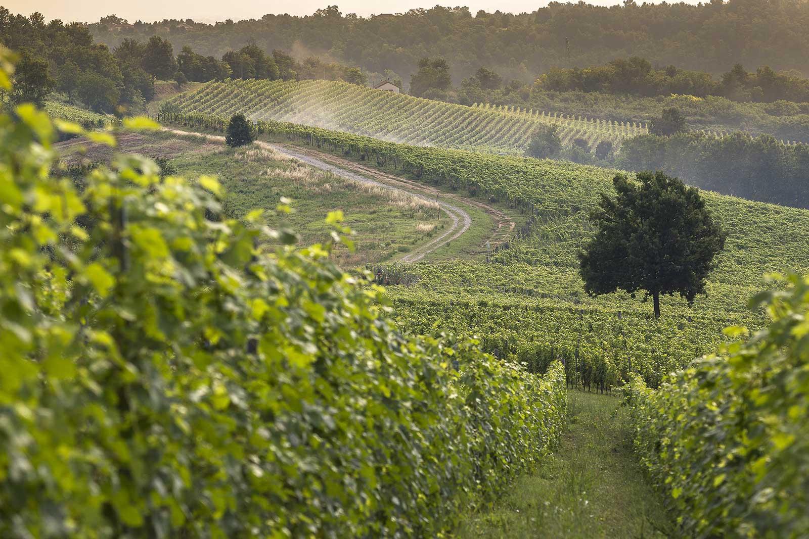 The Rocchetta Tanaro vineyard where Bricco dell'Uccellone comes from. ©Braida by Giacomo Bologna