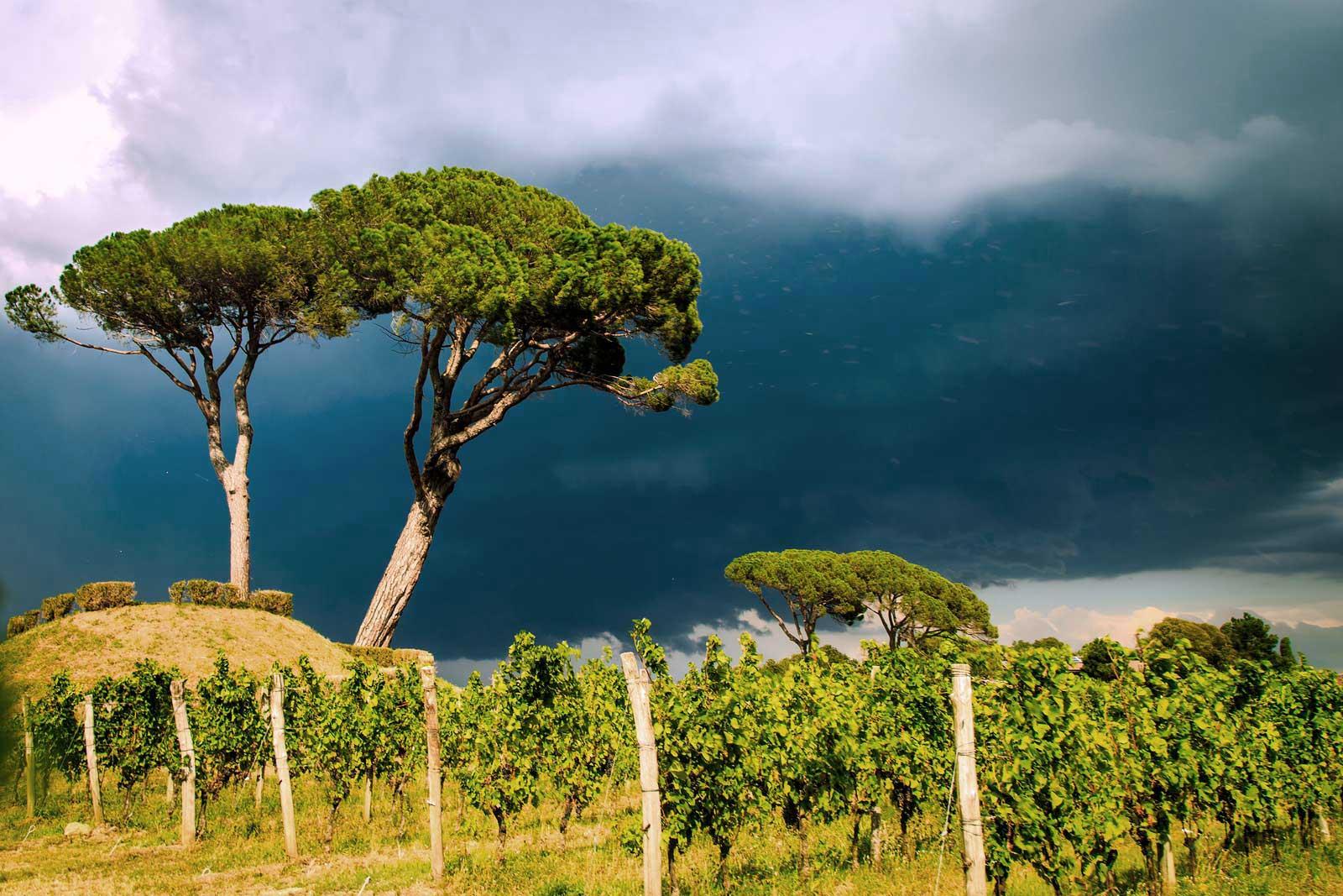 The hills of the Collio DOC are renowned for fostering white-wine grapes, Friuli-Venezia Giulia, Italy.