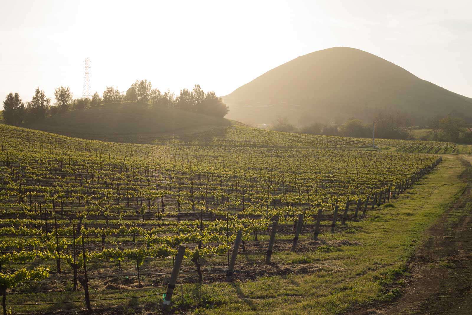 Vineyards, Edna Valley, Islay Hill, San Luis Obispo, California. ©Kevin Day/Opening a Bottle