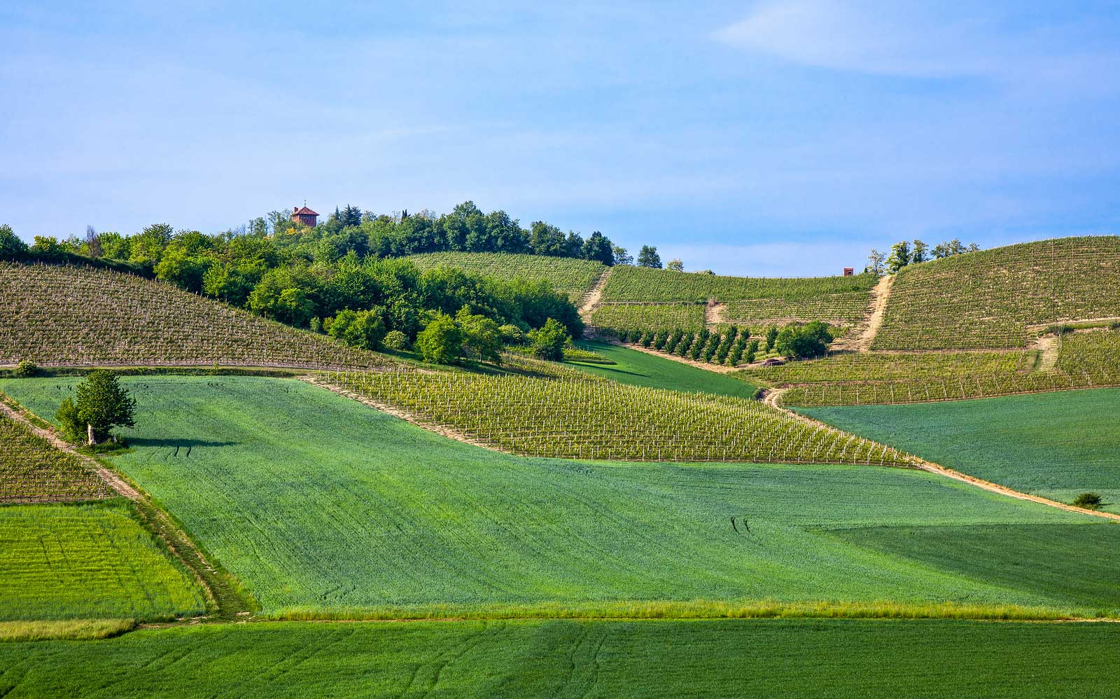 The hills of Monferrato in Piedmont, Italy.