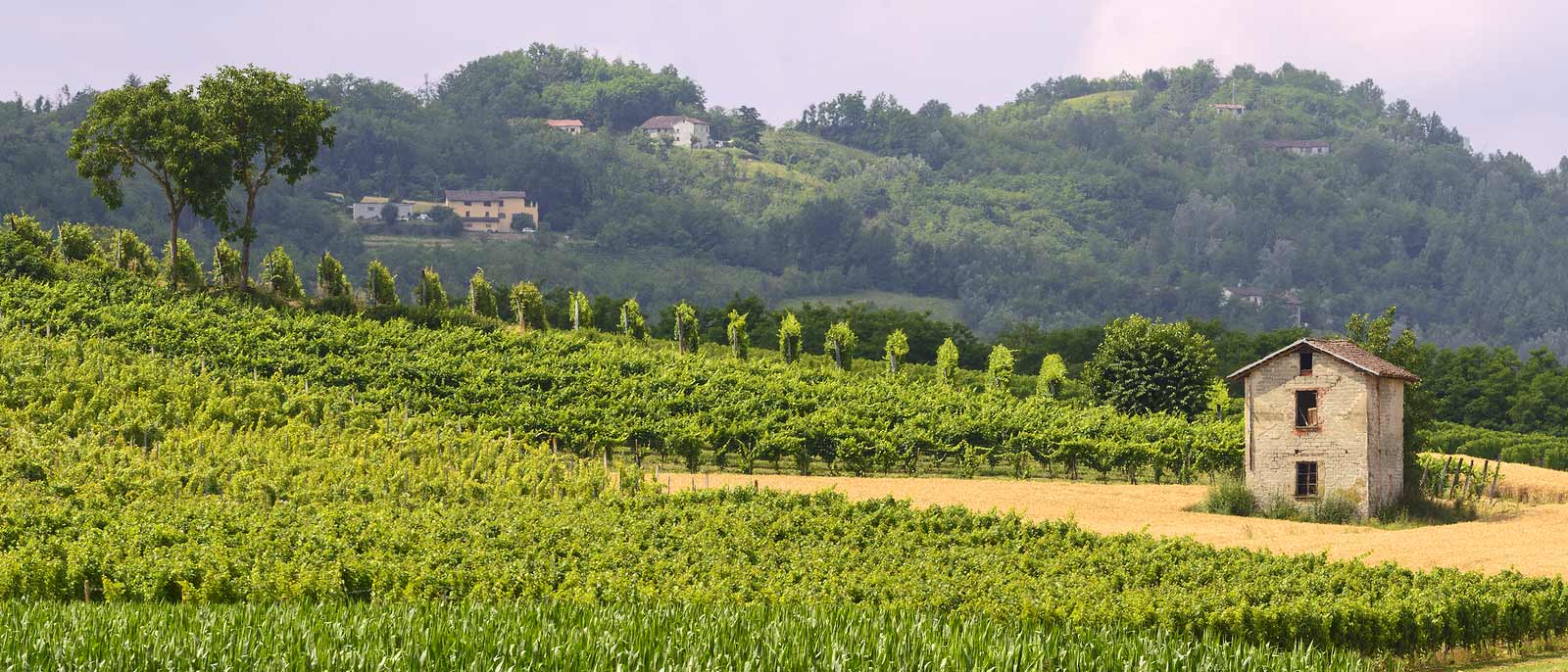 Monferrato Hills in summer, just outside the city of Asti.