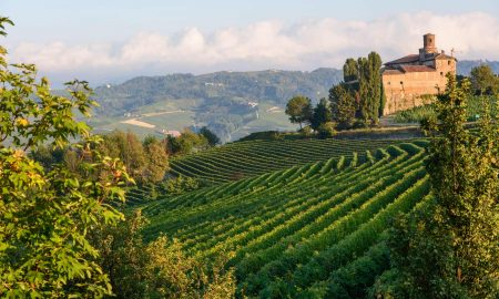 Vineyards in the Langhe Hills where Freisa is grow in small parcels