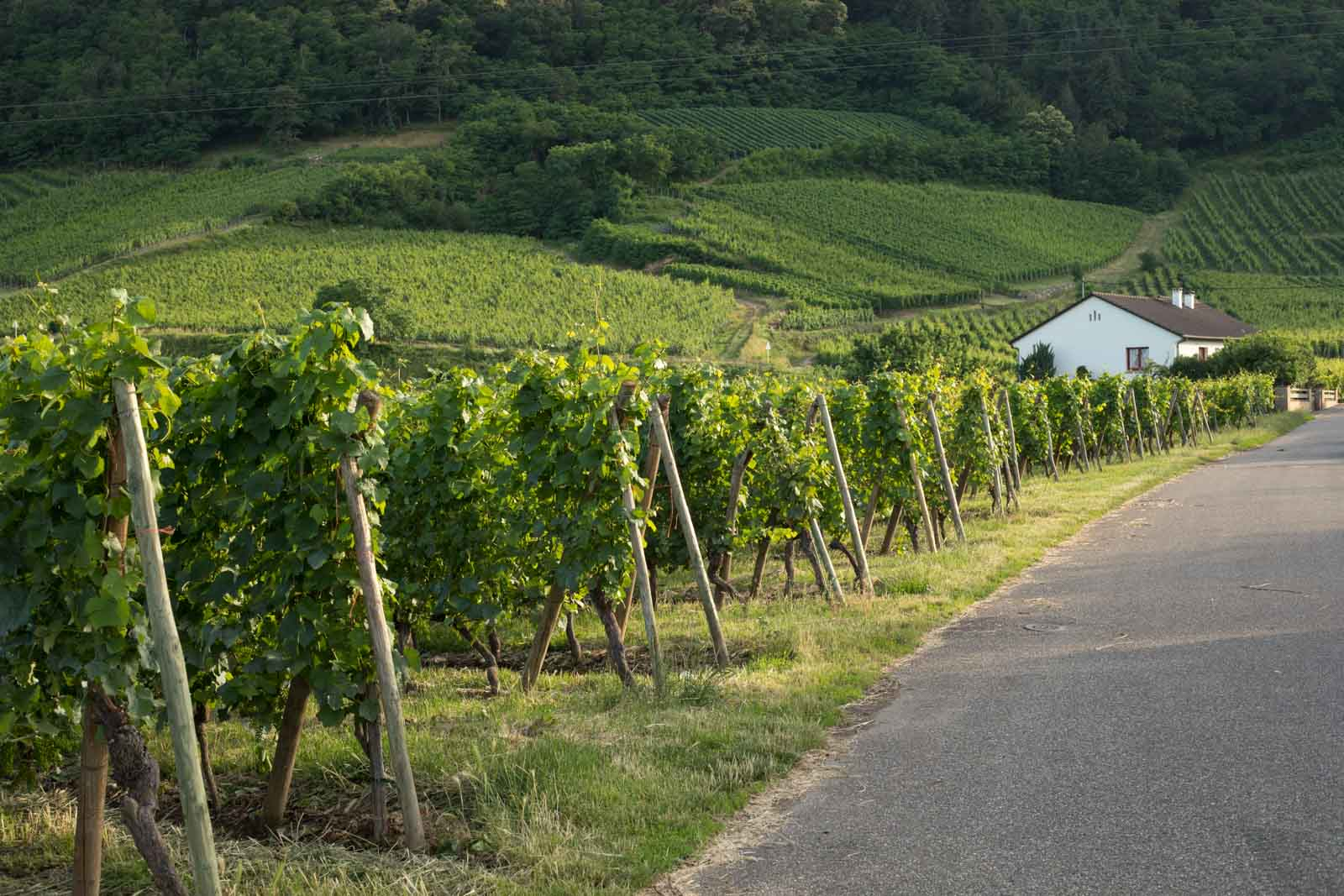 The vineyards near Wintzenheim, one of many idyllic Alsace towns. ©Kevin Day/Opening a Bottle