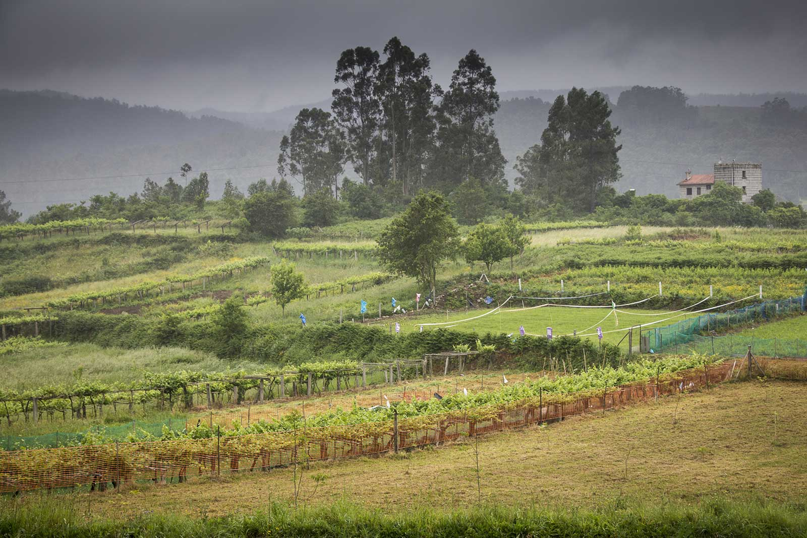 The Rías Baixas wine region of northwestern Spain is cool, wet and very cloudy. Just the kind of place for Albariño.