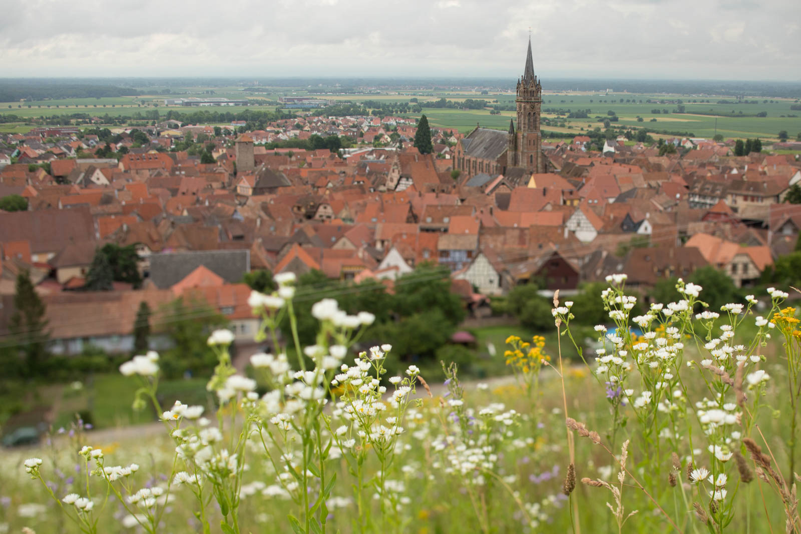 The village of Dambach-la-Ville with flowers growing in the Grand Cru Frankstein. ©Kevin Day/Opening a Bottle