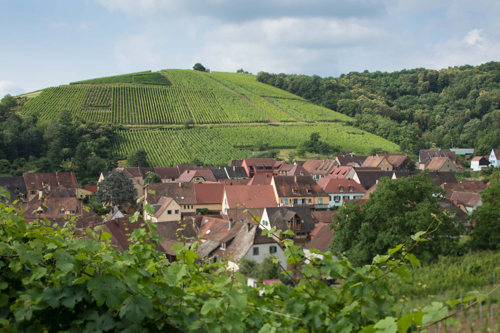 Video: Four Days in Alsace's Vineyards