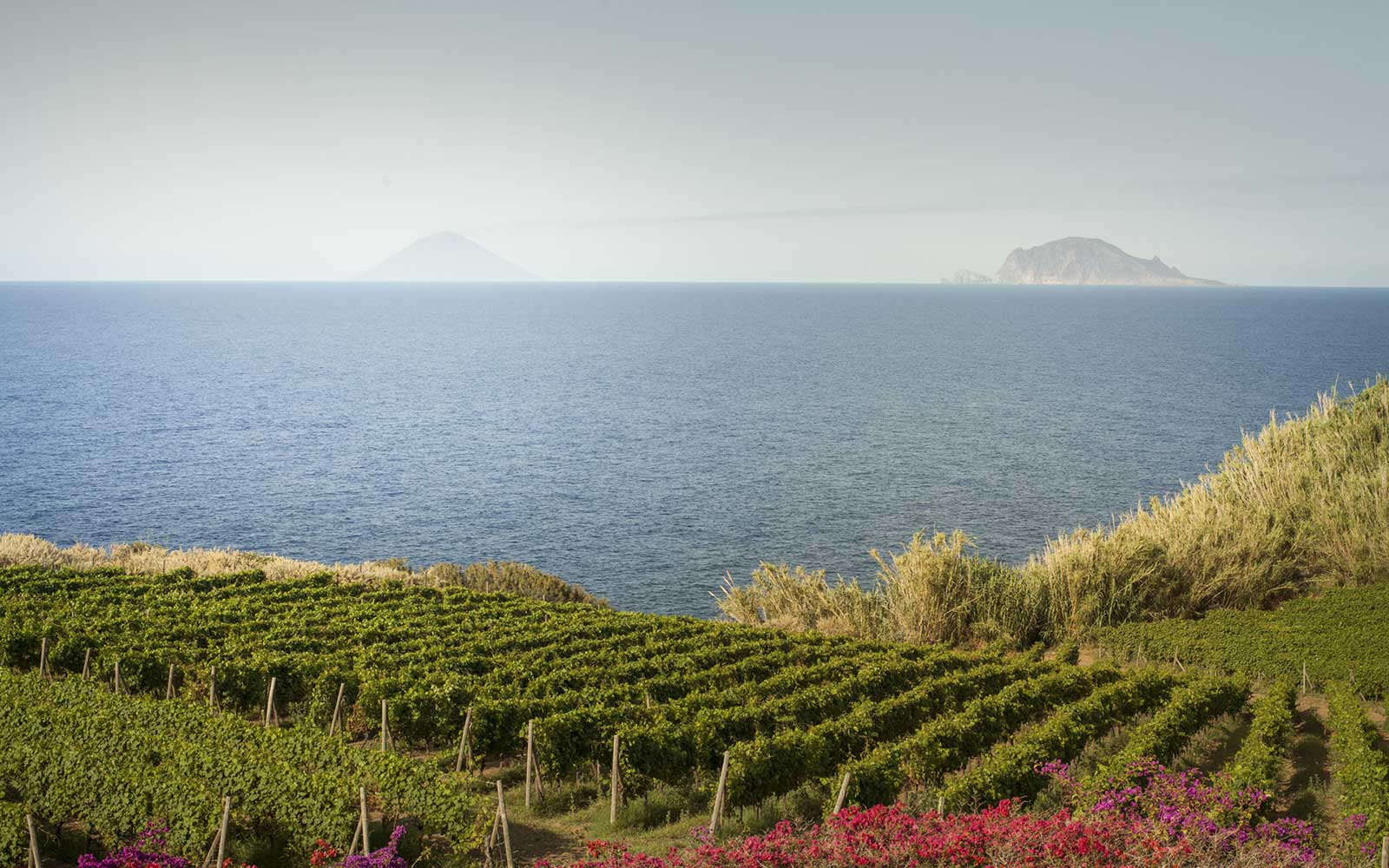 The Aeolian Islands looks a fairly decent paradise, wouldn't you say? ©Tenuta Capofaro