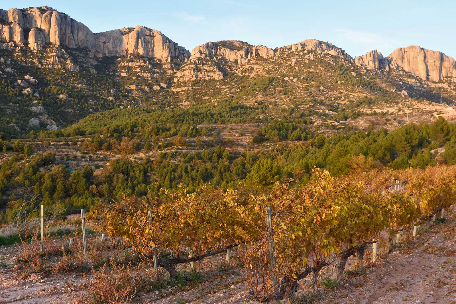 The rugged mountains of Montsant encircle Priorat DOQ.
