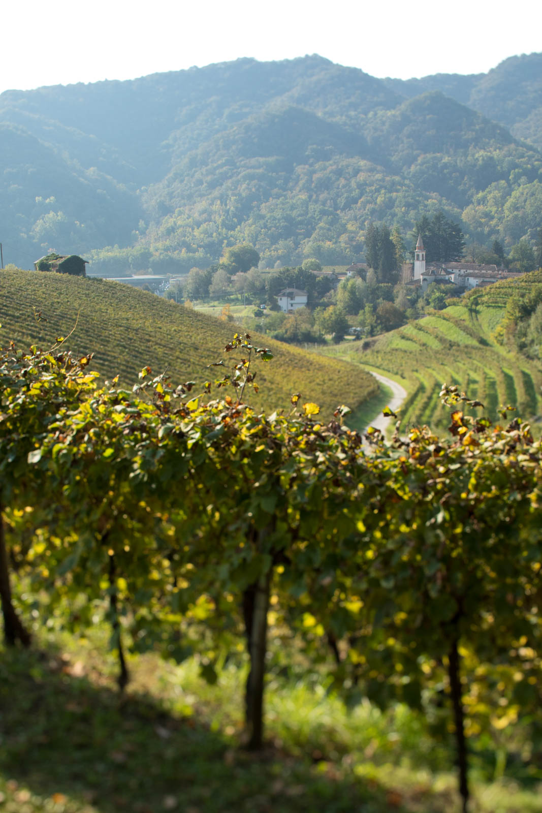 A view of the village of Campea from the Rive di Campea vineyard that Bisol owns. ©Kevin Day/Opening a Bottle