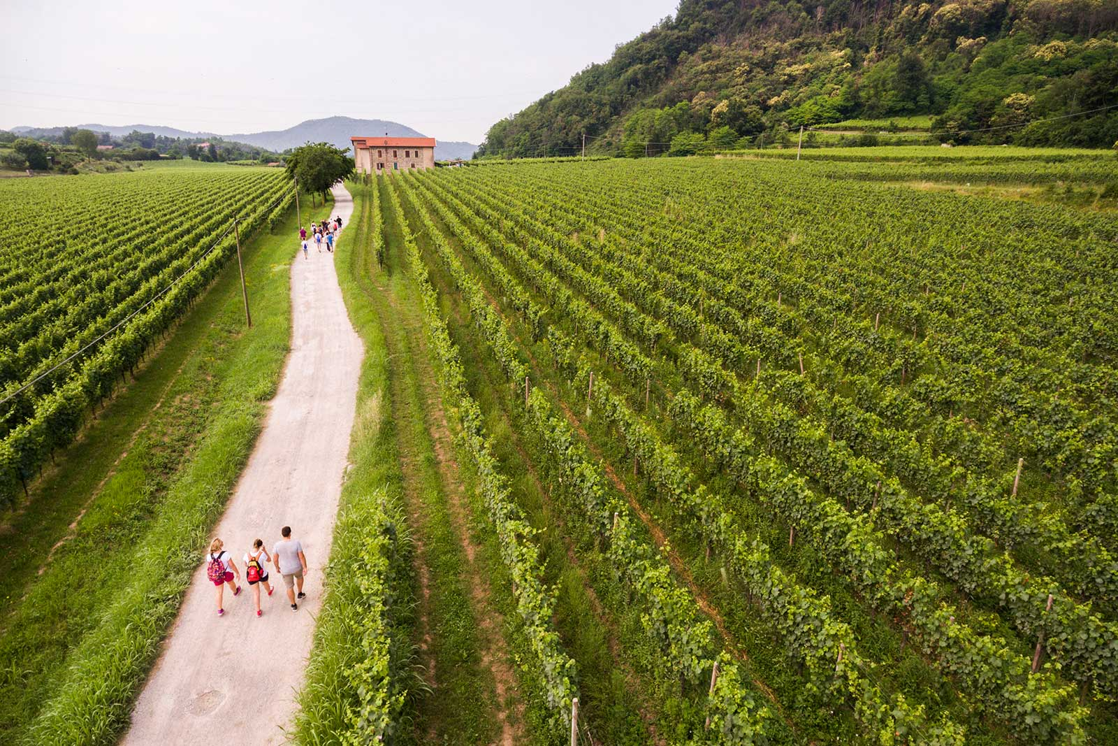 An aerial view of Franciacorta's vineyards. ©Fabio Cattabiani/Consorzio di Franciacorta