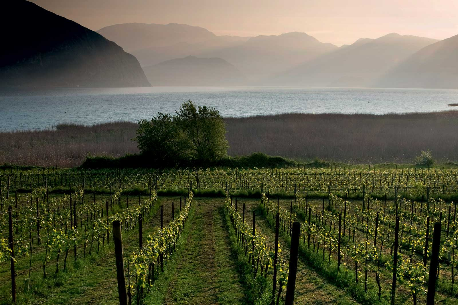 Lake Iseo is seen behind the vineyards of Franciacorta. ©Aldo Padovan/Consorzio di Franciacorta