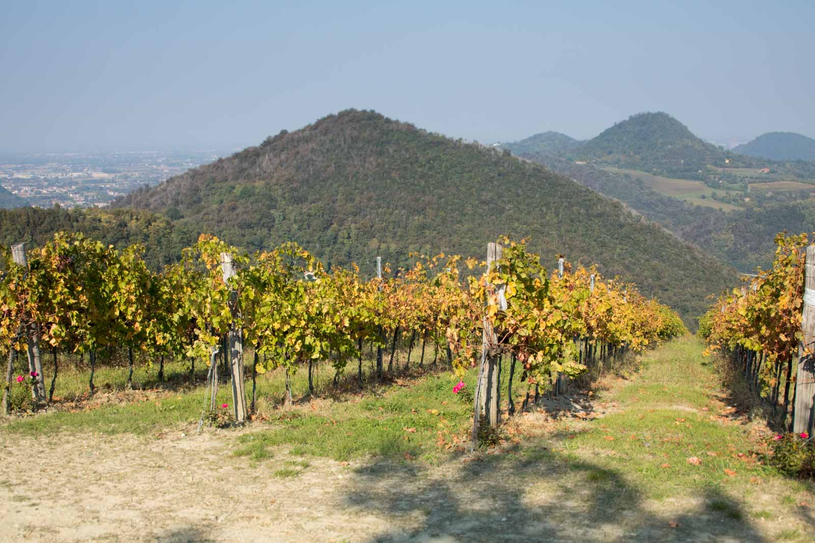 The Terra Bianca di Piro vineyard with the volcanic outline of the hills stretching to the north. ©Kevin Day/Opening a Bottle