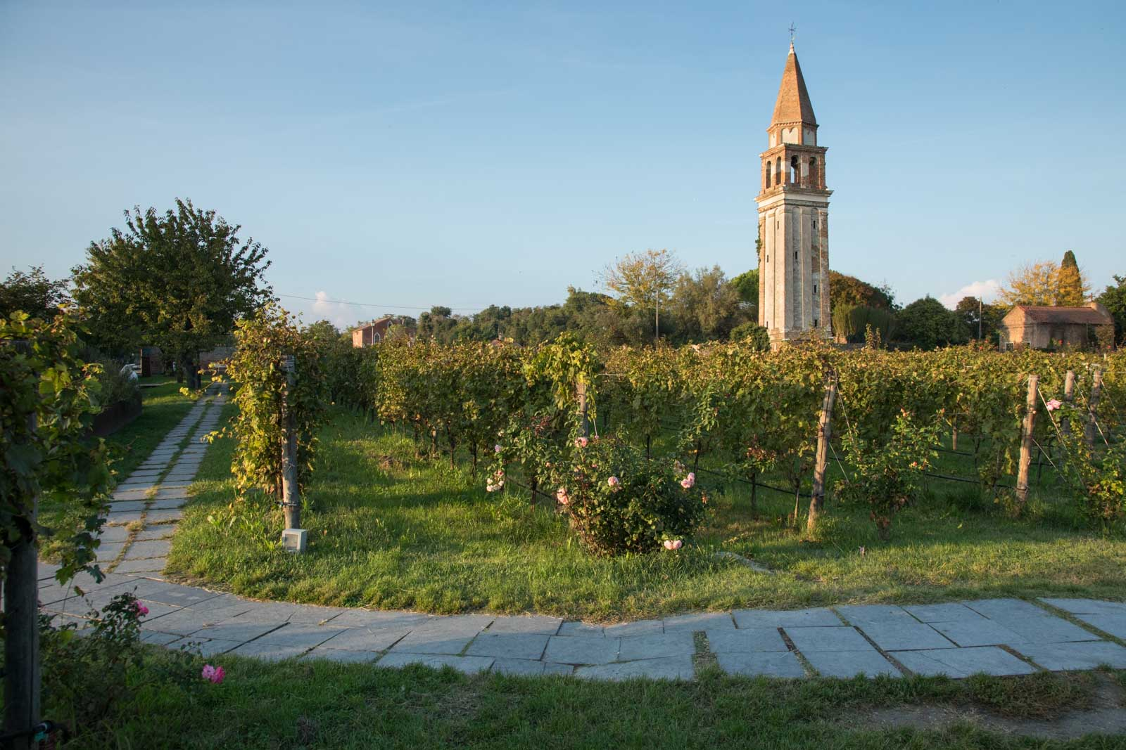 The vineyard and campanile at Venissa on the island of Mazzorbo. ©Kevin Day/Opening a Bottle