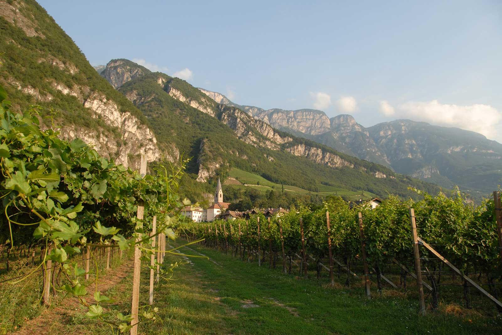 Alois Lageder's Porer vineyard is prized terroir for Pinot Grigio. ©Alois Lageder