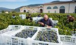 Harvest at Dal Forno Romano in Valpolicella, Italy ©Kevin Day/Opening a Bottle