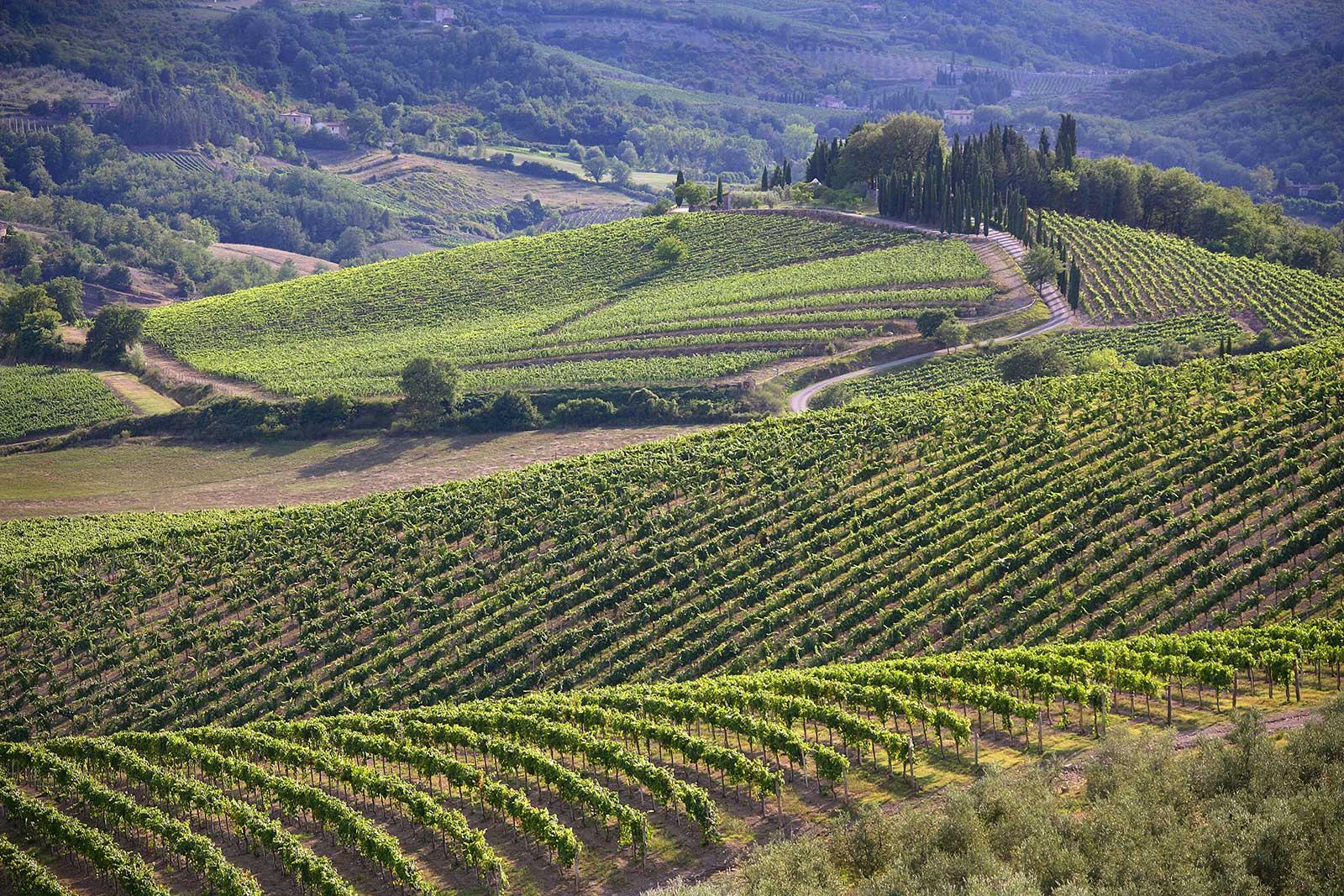 Vineyards near Radda in Chianti ©Consorzio Chianti Classico