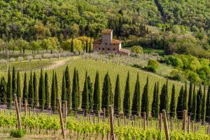 First-Taste Guide to Chianti Classico