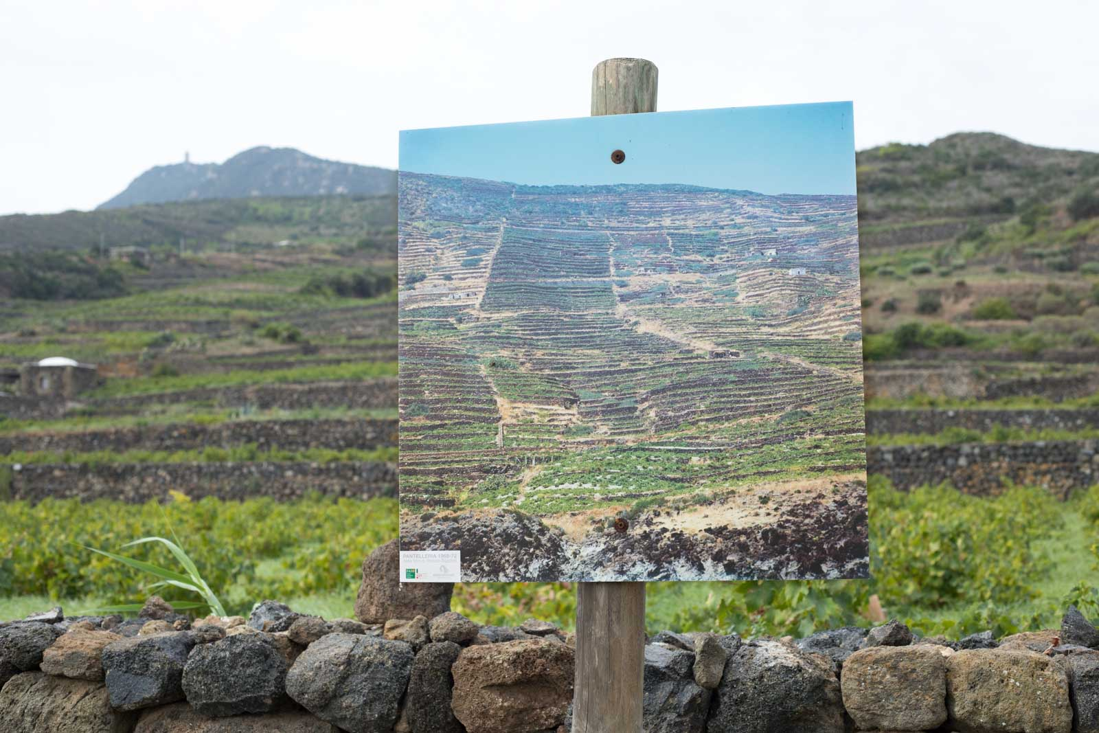 Over the years, many terraces have been abandoned. Donnafugata has an outdoor photo gallery which shows what the island was like 50 years ago at the height of grape production. ©Kevin Day/Opening a Bottle