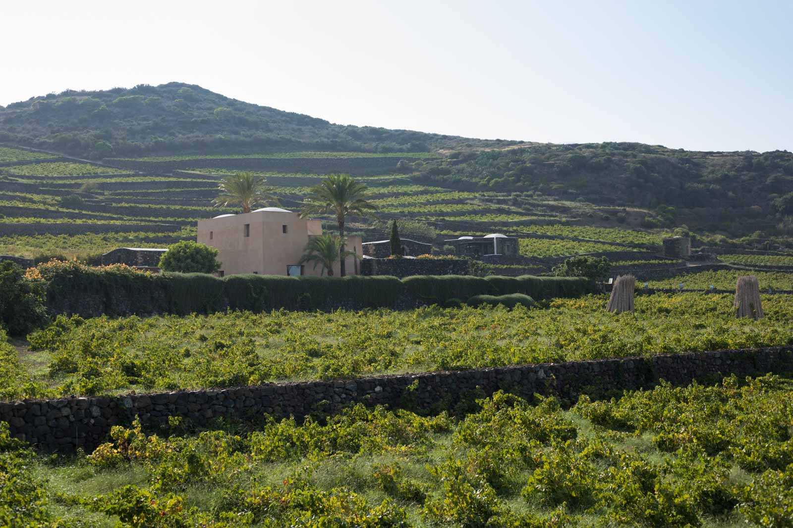 Donnafugata's Pantelleria facility is used exclusively for the production of Ben Ryé and Kabir, a sweet Moscato di Pantelleria made from Zibbibo (aka Moscato di Alessandria). ©Kevin Day/Opening a Bottle
